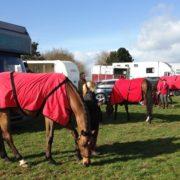 Team grazing at Larkhill