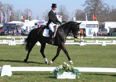 Horses | Reybridge Eventing