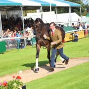 Burghley - first trot up